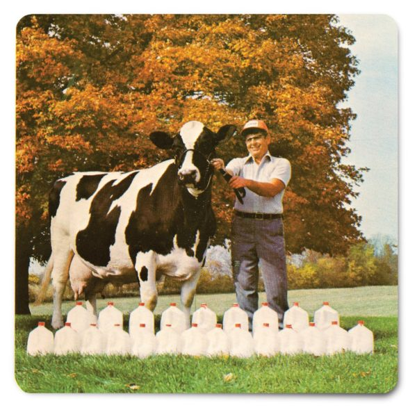 In January 1975, Beecher Arlinda Ellen produced 23 gallons of milk in one day, five times a Holstein